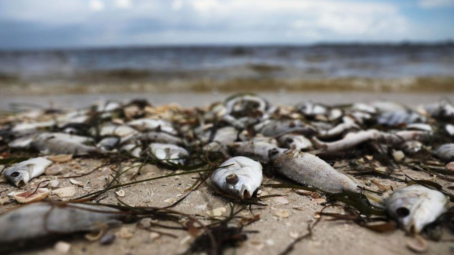 RED TIDE RAISES A RED FLAG