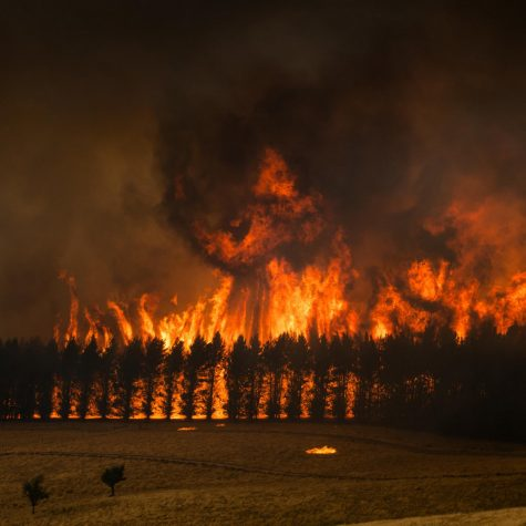 Australian Fires in Florida's Backyard