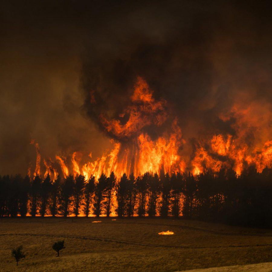 Australian Fires in Florida's Backyard